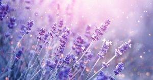 Photo of lavender fields in bloom representing the calm felt after anxiety treatment for symptoms of anxiety. Begin therapy in Washington DC 20036 at Monarch Wellness and Psychotherapy